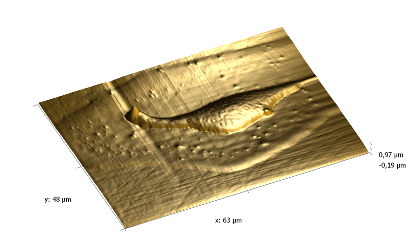 Collagen drops on surfase. AFM image. Topography 3D