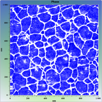 Latex microspheres on surface, covered water film. AFM image. Phase.