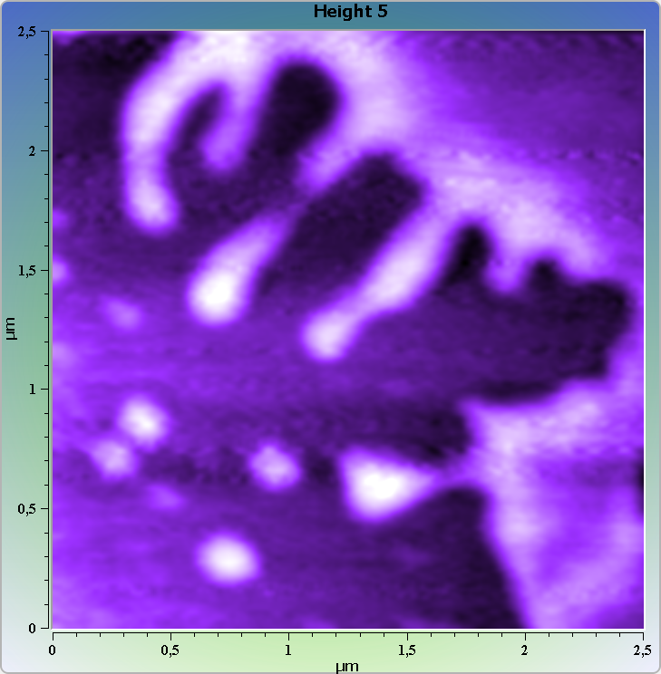 DNA-protein complexes on mica. AFM images. Semi-contact mode. Topography.