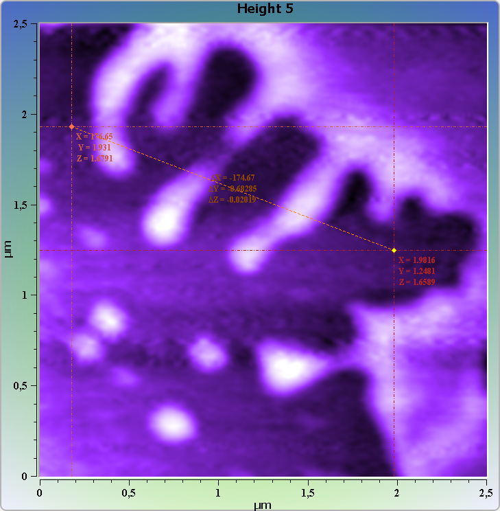 DNA-protein complexes on mica. AFM images. Semi-contact mode. Topography and cross-section.